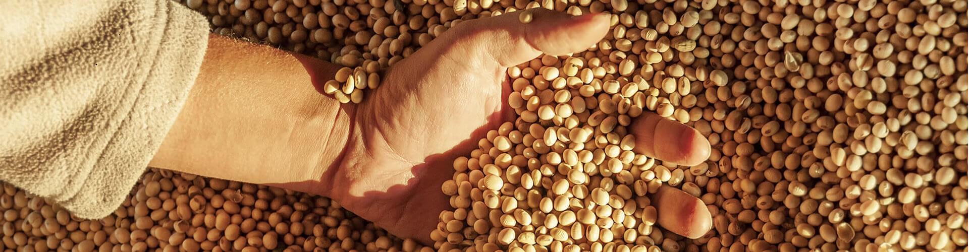 Alimentos Naturais para Empórios e Supermercados